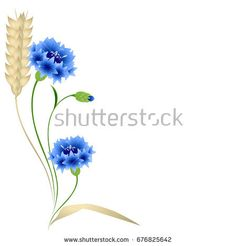 Floral background with wheat ears and blue cornflowers.