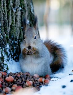 Lots of food for the winter! by Gleb Skrebets