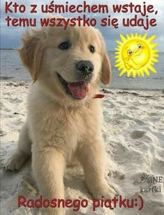 Weekend Humor, Motto, Good Morning, Labrador Retriever, Cool Stuff, Night, Day, Pictures, Animals