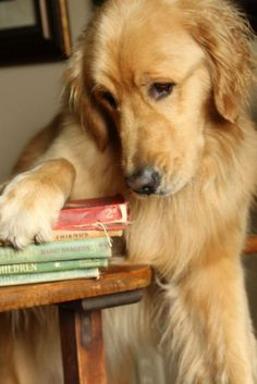 21 Adorable Dogs that Love Reading as Much as You Do - BookBub Blog
