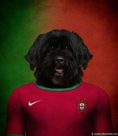 Cão de água português – Portugal   Projeto gráfico mostra cachorros vestindo a camisa das seleções de seus países - Yahoo Esporte Interativo