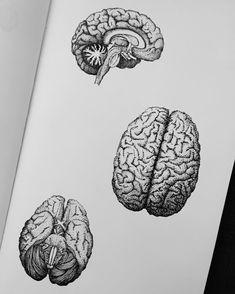 Brain Painting, Brain Drawing, Brain Art, Anatomy For Artists, Anatomy Art, Brain Anatomy, Medical Drawings, Medical Art, Tattoo Geometrique
