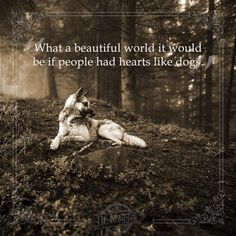 What a wonderful world it would be! What A Beautiful World, Pet Health, Monday Motivation, Wonders Of The World, Dog Love, Pets, Quotes, Nature, Animals And Pets