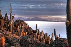 Cactus Island, Bolivia.