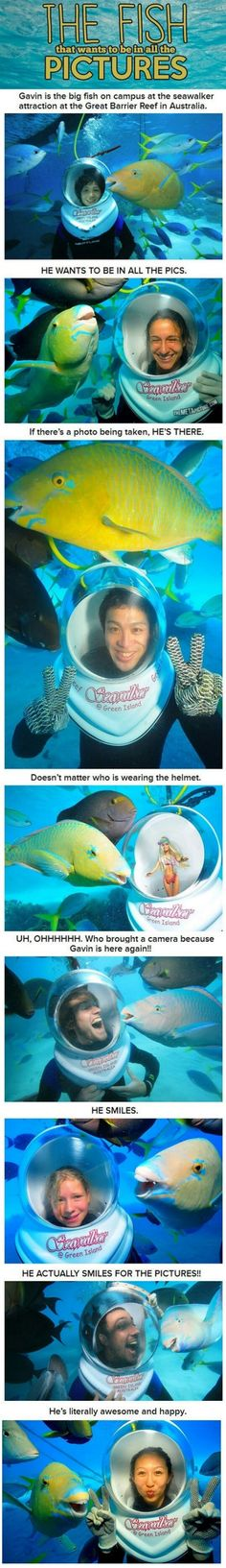 The Fish That Wants To Be In All The Pictures | WeKnowMemes