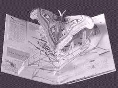 A Concise History of Pop-up and Movable Books by Ann Montanaro
