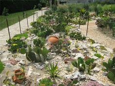 Cacti And Succulents, Garden Ideas, Cactus, Gallery, Plants, Image, Prickly Pear Cactus, Plant, Backyard Ideas