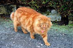 Kissa, Tausta, Eläinten, Pet