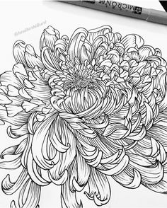 ideas for tattoo designs drawings sketchbooks pens Tattoo Designs, Tattoo Design Drawings, 3d Drawings, Floral Drawing, Art Floral, Chrysanthemum Drawing, Blackwork, Illustrations, Illustration Art