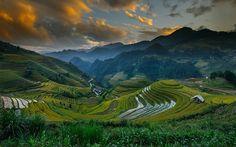 Les rizières en terrasses à Mu Cang Chai Vietnan