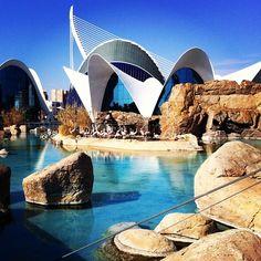 Oceanografic Valencia. Awesome place :)