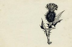 thistle - Sylvia Plath's Unseen Drawings, Edited by Her Daughter and Illuminated in Her Private Letters – Brain Pickings Sylvia Plath, Collages, Thistle Tattoo, Chestnut Horse, American Poets, Botanical Drawings, Botanical Prints, Collaborative Art, Moose Art