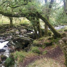 River Plym. Old Oak & Birch, North Wood, Dartmoor.