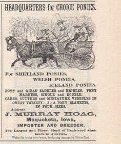 1891 J Murray Hoag Maquoketa IA Ad: Importer & Breeder Shetland Welsh Ponies