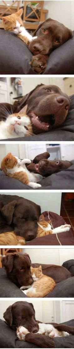 funny-dog-cat-love-hug-sleeping-kitten