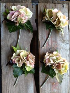 Hydrangea buttonholes
