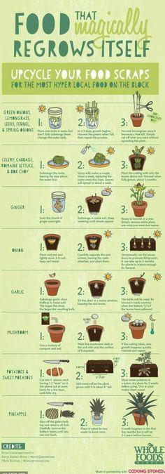 How to regrow food.  (Be prepared for zombie apokalypses etc)