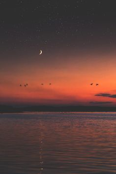 """dennybitte: """"moonlight flight by Denny Bitte """""""