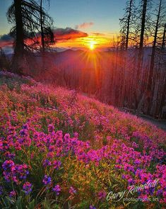 every sunrise or sunset still reminds me of you - Steamboat Springs Beautiful Sunset, Beautiful World, Beautiful Places, Beautiful Flowers, Beautiful Morning, Stunningly Beautiful, Beautiful Scenery, Foto Picture, All Nature