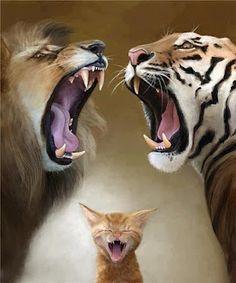 QUIT FIGHTING!!!!