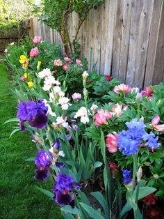 Peony and Iris Gardens | Jackie is very proud of her peony and iris border.