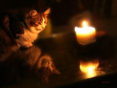 Double vie de chat : Art numérique par de-cartes-en-cadres