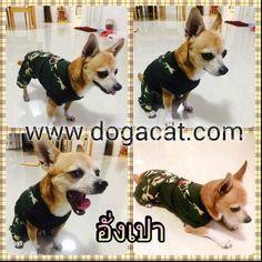 นององเปา ในชดสนขเอยมทหาร เทสดๆคะ #reviewdogacat  line : dogacatthailand  www.dogacat.com FB : dogacat  Fanpage : dogacatthailand Instagram : dogacat  #dogacat #reviewdogacat #เสอผาหมา #เสอสนข #เสอหมา #เสอผาสนข #เสอแมว #เสอผาแมว #แวนตาสนข #รองเทาสนข #puppyclothes #petstagram #puppy #petclothes #petsofinstagram #dogstagram #dogoftheday #dogdress #dogdaily #dogapparel #dogclothes #dogcute  #dogshoes #doghat #chihuahua #shihtsulovers #shihtzu #shihtsugram #ปลอกคอสนข #หมวกสนข by dogacat…
