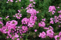 10 best annuals for sun