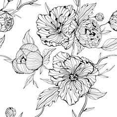 Seamless background with flowers. Vector black and white seamless background with gentle peony flowers. Flower Coloring Pages, Art Icon, Seamless Background, Free Illustrations, Art Sketchbook, Botanical Illustration, Line Drawing, Vector Art, Eps Vector