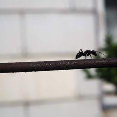 Débarrassez-vous des fourmis sans produits chimiques