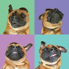 Smiling Dog, Mastiff, by susieloucks at etsy.