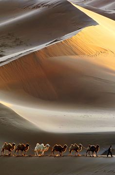 Camels in desert sands Beautiful World, Beautiful Images, Paises Da Africa, Desert Sahara, Gobi Desert, Cool Pictures, Cool Photos, Camelus, Deserts Of The World
