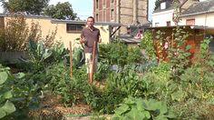 En pleine ville, il cultive 300 kilos de légumes par an