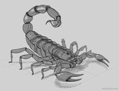Scorpion drawing