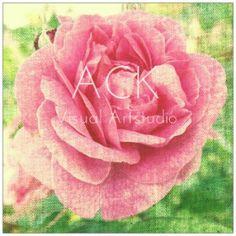 Canvas Rose