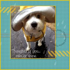 MDS MONDAY - APRIL SHOWERS BRING MAY FLOWERS - OR PUPPY DOGS?
