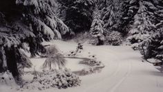 Raymond WA -- granny's winter wonderland.