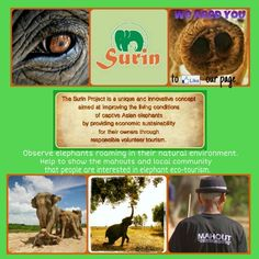 Surin Project elephant eco-tourism