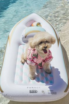Dog Pool Ramp, Dog Pool Floats, Dog Swimsuit, Terrier Mix Breeds, Baby Animals, Cute Animals, Summer Dog, Pet Dogs, Fur Babies