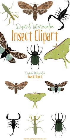 """This insect watercolor clipart collection makes show-stopping, modern addition to your creative projects. These handsome bugs are digitally painted in a watercolor style. Each image is approximately 5""""x3"""", 300dpi, RGB color in PNG format, with a transparent background so they're easy to use and ready to print. They're perfect for scrapbooking, cardmaking, social media, and more!"""