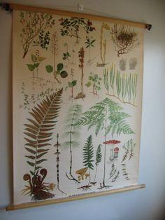 1940s Swedish School Botanical Chart Woodland Plants!!! Bebe'!!! Great wall decor!!!