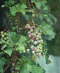 Alena Savchenko Grape Painting, Fruit Painting, Watercolor And Ink, Watercolor Flowers, Grape Tree, Coffee Theme, Fruit Photography, Vides, Vintage Art Prints