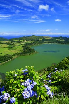 Furnas Lake with hydrangeas on the foreground. Sao Miguel island, Azores islands, Portugal