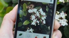 PlantNet - the App That Identifies Plants From A Picture!  Watch for it in the US, still being developed...