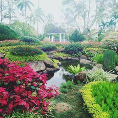 #suroita #davao #prayermountain ctto Davao, Prayers, River, Garden, Outdoor, Instagram, Outdoors, Garten, Lawn And Garden