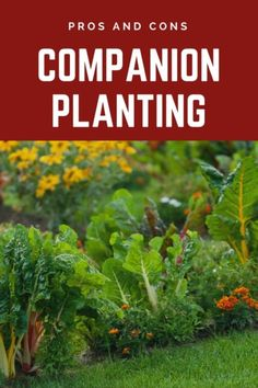 Companion Gardening It's important to learn about the downsides of companion planting as well as the beneficial aspects before practicing this common garden technique. Read on to learn more. Organic Gardening, Gardening Tips, Gardening Books, Companion Gardening, Household Pests, Growing Tomatoes In Containers, Garden Guide, Garden Ideas, Garden Fun