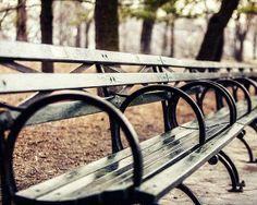 Central Park Bench!   #CityScene #NYC #CentralPark
