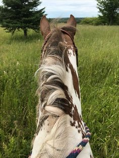 This looks so much like him, sure do miss this view, the feel of his gorgeous hair, the feel of his heart beating, the gorgeous views and lovely equine smell...