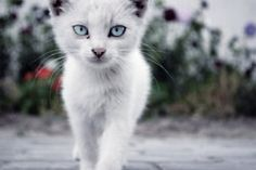 Baby's got blue eyes ...