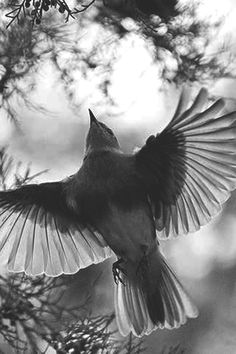 Bird.°
